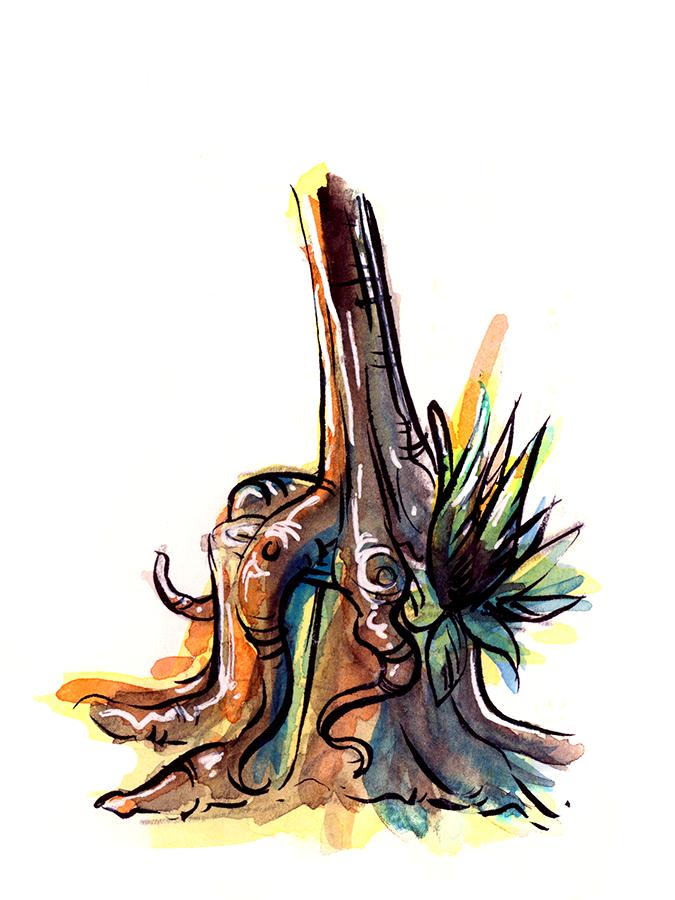 sketchbook_016_rainbow-stump_WEB